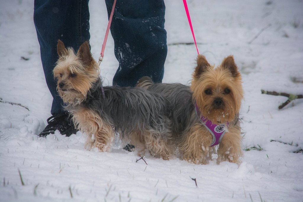 Lucy-and-Ricky-Snow-Dogs.jpg